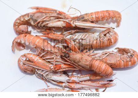 Delicious plate of Crayfish grilled on white background