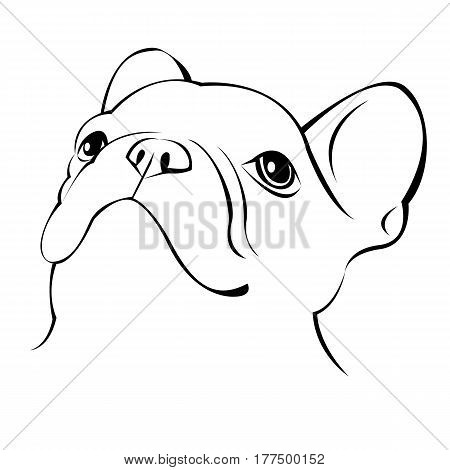dog, vector, breed, cute, pet, animal, bulldog, illustration