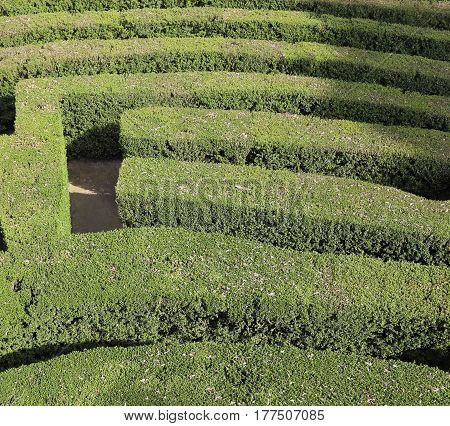 Labyrinth With The Hedges In An Outdoor Garden