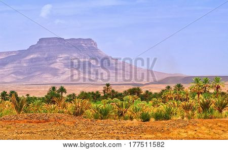 Table mountain and date palms landscape in oasis in Draa Valley Morocco