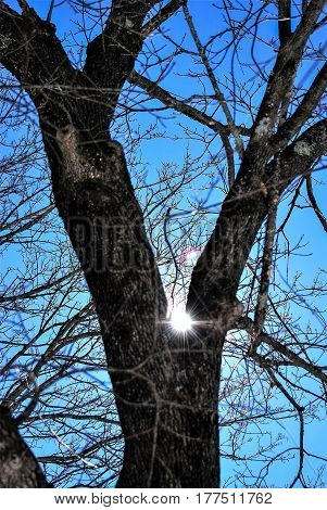 Sun sparkling through oak tree branches in a deep blue mid-day sky #1