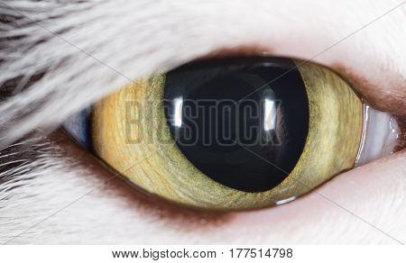 Open cat's eye as a background. macro