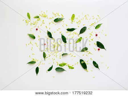 Pattern with petals of chrysanthemum flowers, ficus leaves and ripe rowan on white background. Overhead view. Flat lay.