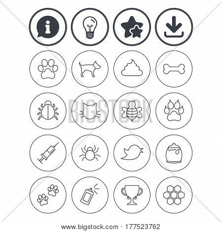 Information, light bulb and download signs. Pets and Insects icons. Dog paw. Cat paw with clutches. Bone, feces excrement and vaccination. Honey, bee and honey comb. Best quality star symbol. Vector