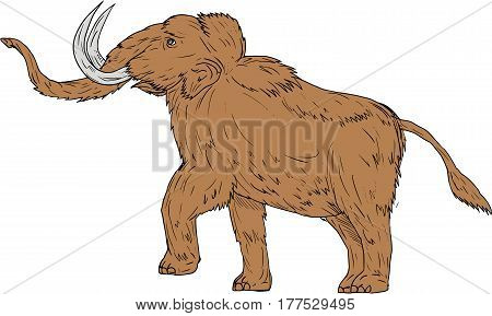 Drawing sketch style illustration of a woolly mammoth Mammuthus primigenius a prehistoric elephant that lived during the Pleistocene epoch and one of the last mammoth species prancing viewed from the side set on isolated white background.