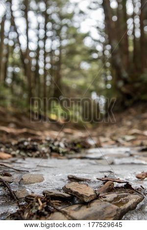 Ice on High Mountain Trail in the Smoky Mountains
