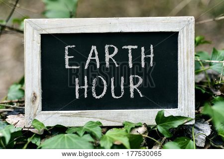 closeup of a wooden-framed chalkboard with the text earth hour written in it, placed on a tree, surrounded by ivy leaves