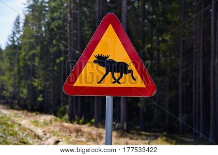 Moose roadsign in a foresty area