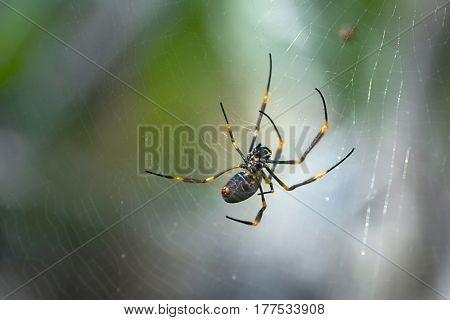 Spider weaving in it's web