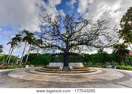 Havana Cuba - January 8 2017: Ceiba Tree in the center of American Fraternity Park in Havana Cuba.