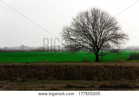 Lonely tree in field. Spring awakening of life