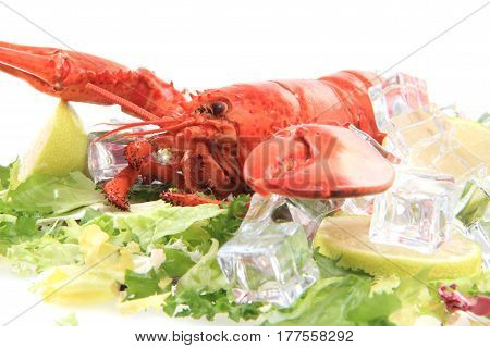 Fresh Red Lobster