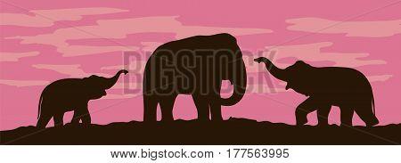 Silhouettes of elephants on sunset background. Vector illustration