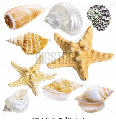 Seashell collection isolated on white background. Sea star and nautilus shell