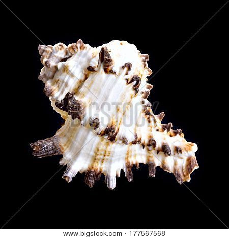 Nautilus shell section on black background. Sea shell