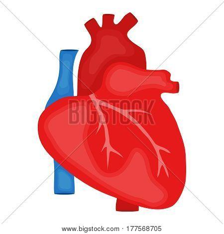 The heart of man. Flat design vector illustration vector.