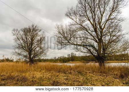 Bare trees at the banks of a creek in a Dutch national park. It is at the end of the winter season. The reed plants are yellow and withered.