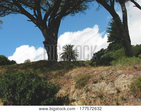 LANDSCAPE, WITH TREES IN THE FORE GROUND AND CLOUDS IN THE BACK GROUND 16dgfg
