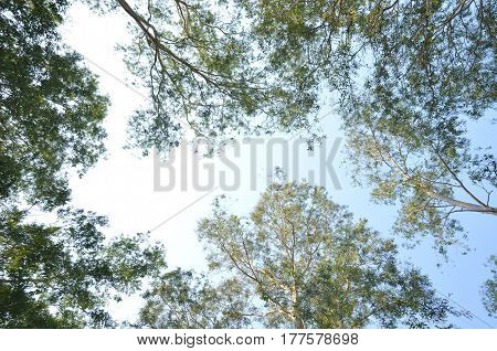 The branches of trees and the sky during the daytime.