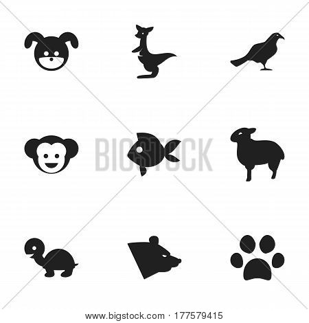 Set Of 9 Editable Animal Icons. Includes Symbols Such As Tortoise, Baboon, Turbot And More. Can Be Used For Web, Mobile, UI And Infographic Design.