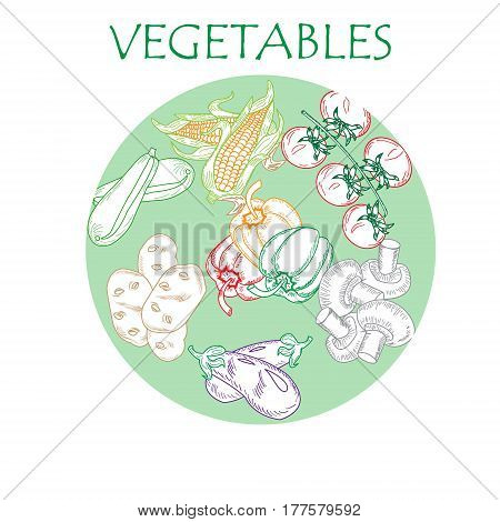 Set flat icon of vegetables drawing with color lines on white background color circle