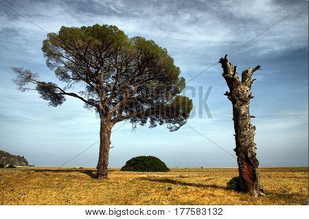 The trees on the Lycian Way in Cirali, Kemer, Antalya