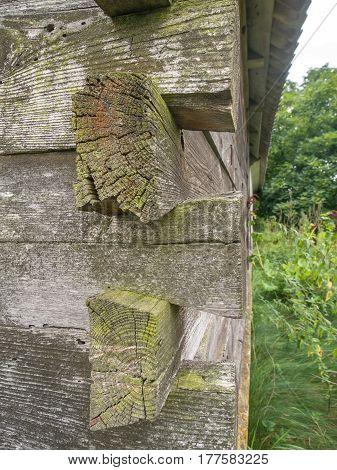 Wooden Log Walls In Podlasie