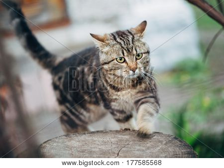 brown stripes cute cat walks exploring the world