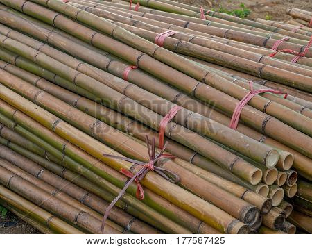 Stems Of Bamboo Trees