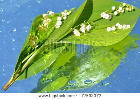 lilies of the valley reflected in water, pearls