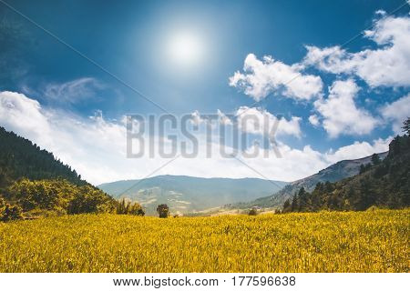 Beautiful mountain landscape in the summer day. Yellow meadow, bue sky with clouds and sun. Nature background. Agriculture rice field in Nepal, trekking in Himalaya. Exploring beauty world
