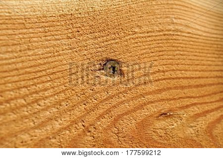 screw screwed in wood with wood shavings