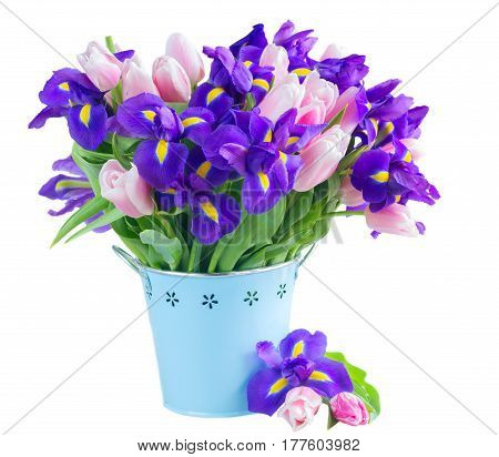 Blue irises and pik tulips in metal pot isolated on white background