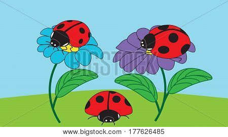 Two ladybirds sit on flowers and one ladybird crawls on the ground on a summer day.