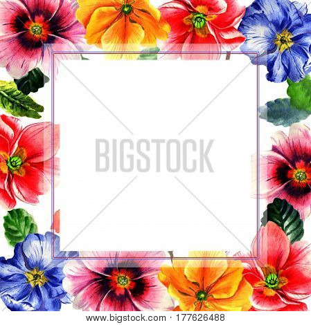 Wildflower Primrose flower frame in a watercolor style isolated. Full name of the plant: Primrose or Primula. Aquarelle wild flower for background, texture, wrapper pattern, frame or border.