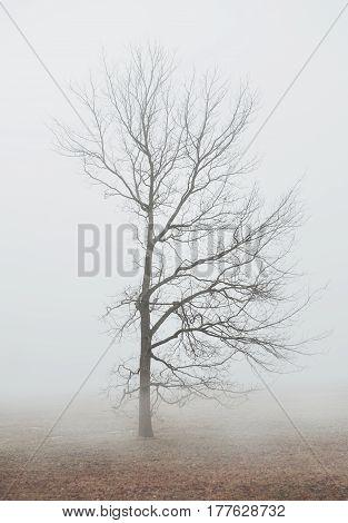 Foggy Moody Scene With Tree In Fog