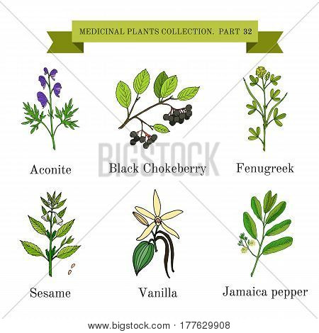 Vintage collection of hand drawn medical herbs and plants aconite black chokeberry fenugreek sesame vanilla jamaica pepper. Botanical vector illustration poster