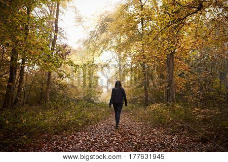 Woman Walking Along Path In Autumn Woodland