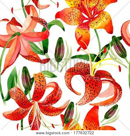Wildflower leopard lily flower pattern in a watercolor style isolated.  Aquarelle wild flower for background, texture, wrapper pattern, frame or border.