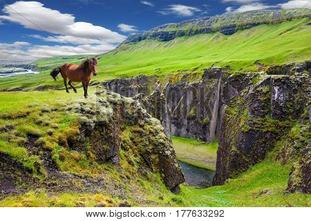 Thoroughbred horse grazes on a cliff. The striking canyon in Iceland. The Icelandic Tundra in July. Bizarre shape of cliffs surround the stream with glacial water