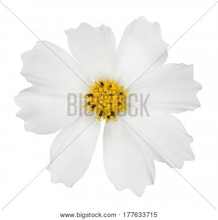 light bloom isolated on white background