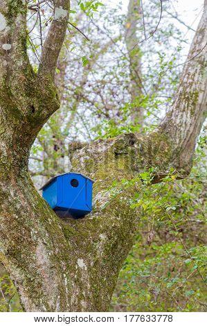 Blue Birdhouse in Tree in Winter Woods