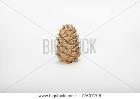Brown cedar cone with resin impregnations close-up isolate
