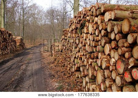 Firewood stacks in the early spring in March so lovely