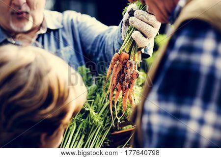 Senior Man Showing Fresh Harvest Carrots