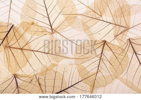 background of brown leaves