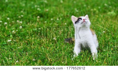 little Motley cat playing on green grass