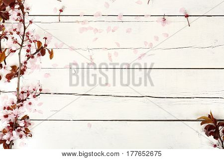 almond tree branch on white weathered wood with copy space spring concept