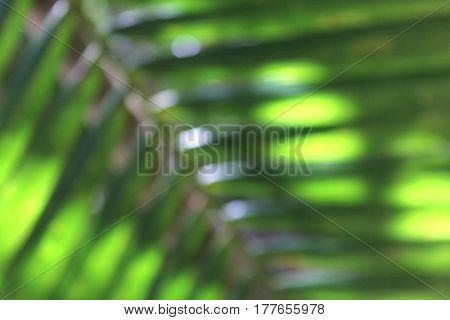 Soft Focus Palm Leaf Background 1