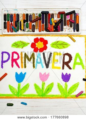 Colorful drawing: word PRIMAVERA (Spring) and beautiful flowers